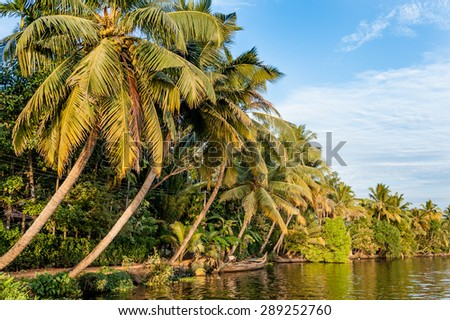 Palm trees and dense vegetation in Kerala backwaters near Alappuzha in India