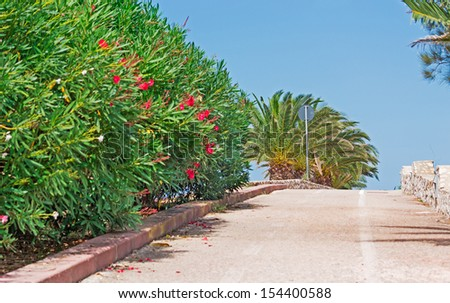 palm trees and oleanders along a cycle lane - stock photo