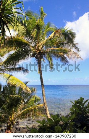 Palm trees and other jungle plants grow right up to the ocean's edge on a beautiful tropical island.