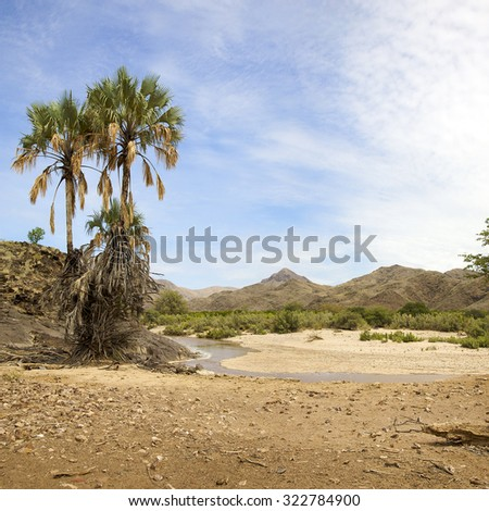 Palm trees and river with blue sky in natural desert landscape in the Kaokoland. Namibia