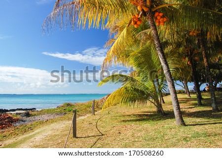 Palm trees and sea view on tropical coast of Mauritius island - stock photo