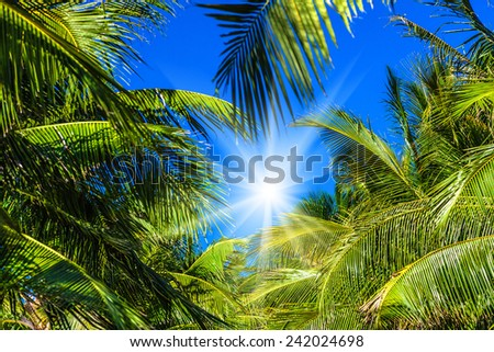Palm trees and sun - stock photo