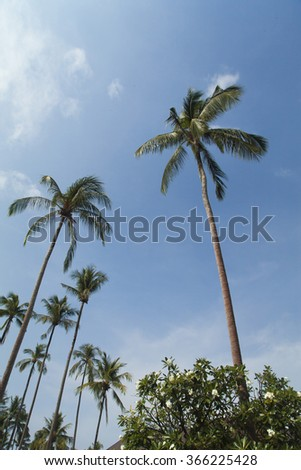 Palm trees and the sky look together very beautifully