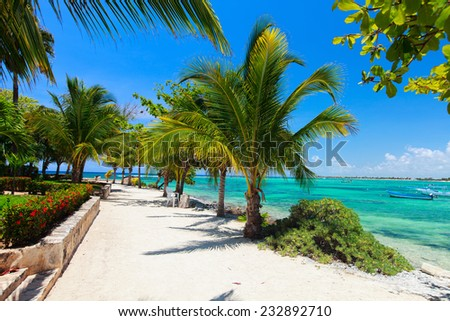 Palm trees at Akumal beach in Mexico - stock photo