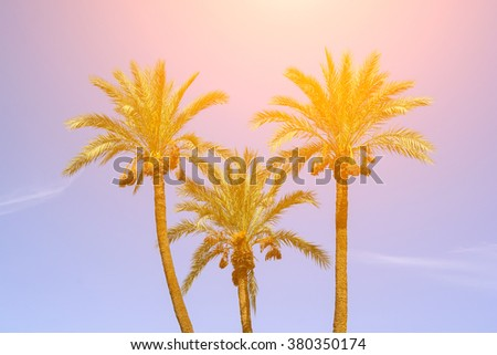 Palm Trees At California Beach Sky Background Low Angle View Of Coconut Branches Palms