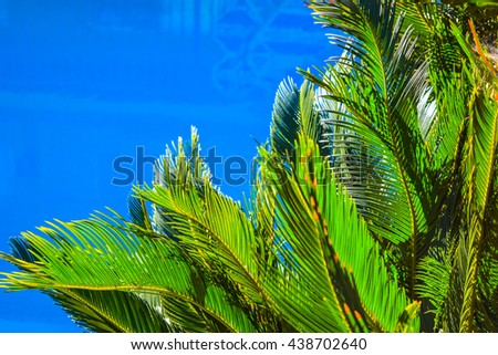 Palm trees at Santa Monica beach in the blue sunny sky. Fashion, travel, summer, vacation and tropical beach concept. - stock photo