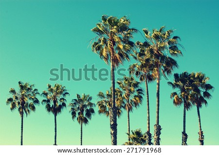 Palm trees at Santa Monica beach. Vintage post processed. Fashion, travel, summer, vacation and tropical beach concept. - stock photo