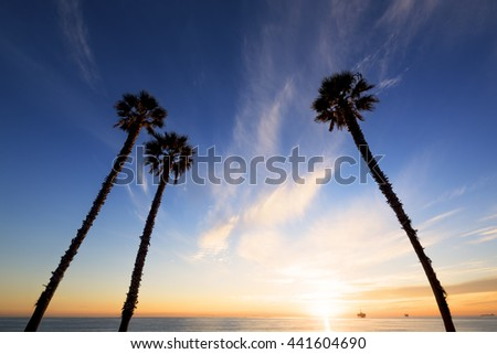 Palm trees at sunset, Huntington beach, California. - stock photo