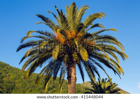 palm trees at sunset in a Park  - stock photo