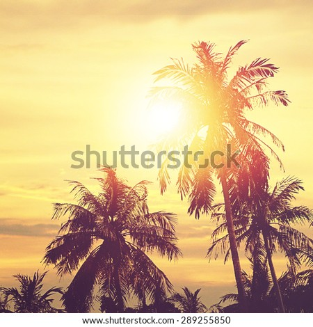 Palm trees at sunset in background. Tropical paradise landscape.Panoramic view.  - stock photo