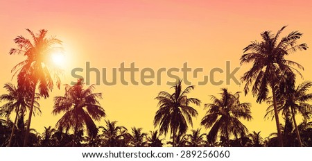 Palm trees at sunset in background. Tropical paradise landscape. Panoramic view.  - stock photo