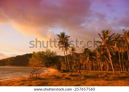 Palm trees at the seaside under pink sunset light - tropical bounty - stock photo