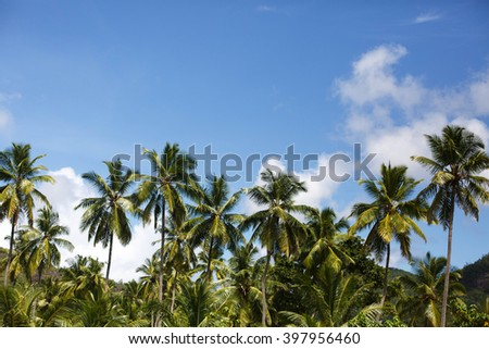 Palm trees at tropical luxury coast resort, vintage toned