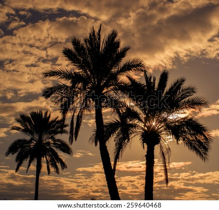 Palm trees background against warm summer evening sky - stock photo