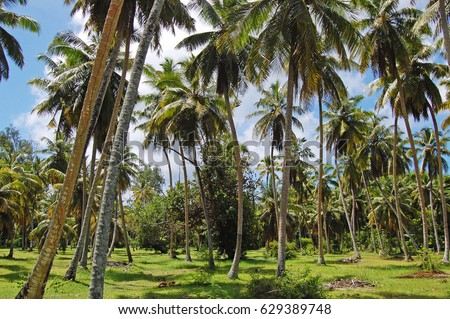 Palm trees background on a wild island sunny day