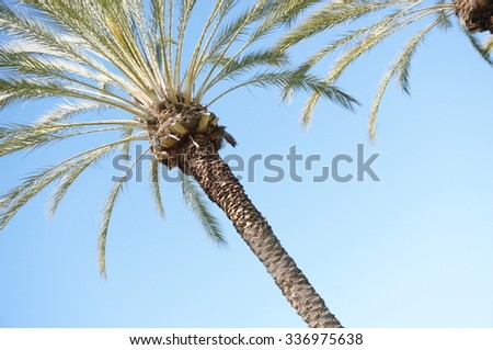 Palm Trees Blue Sky