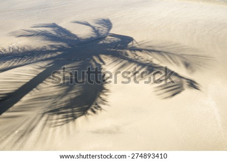Palm trees cast shadows on the smooth golden sand of a remote tropical Brazilian island beach in Bahia Brazil - stock photo