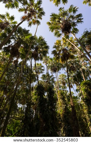 Palm trees decorate in forest