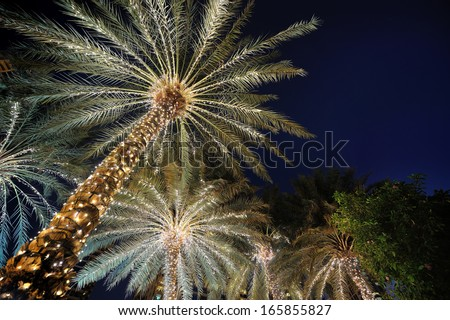palm trees decorated with christmas garland night - Christmas Palm Tree