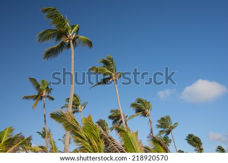 Palm trees diagonal setting, on clear blue sky - stock photo