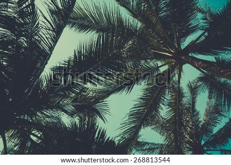 Palm trees from bottom, vintage toned - stock photo