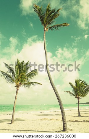 Palm trees growing on sandy beach. Coast of Atlantic ocean, Dominican republic. Photo with blue toned instagram filter effect - stock photo