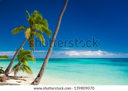 Palm trees hanging over deserted tropical beach - stock photo