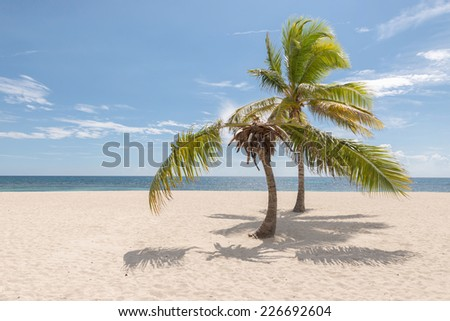 Palm trees in a tropical beach with blue sky , sea and sand on the background.  - stock photo