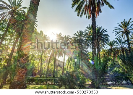 Palm trees in a tropical resort at beautiful sunny day. Image of tropical vacation and sunny happiness. Filtered vintage photo.
