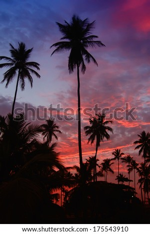 Palm trees in a tropical sunset
