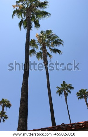 Palm trees in California, USA
