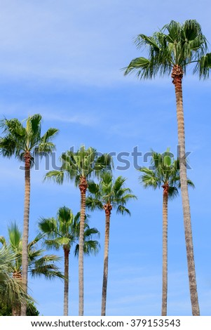 Palm trees in Cannes