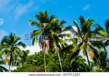 Palm trees in East Bali Indonesia Asia