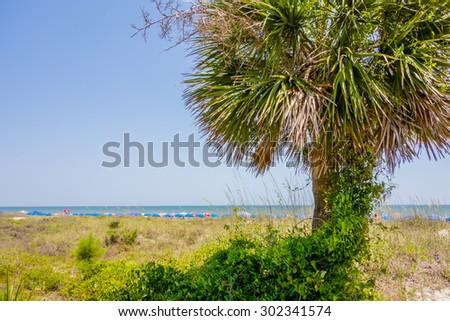 palm trees in georgia state usa - stock photo