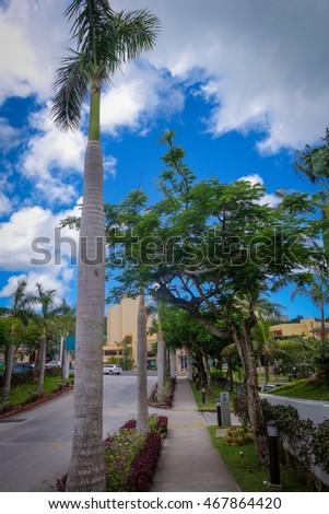 palm trees in guam street