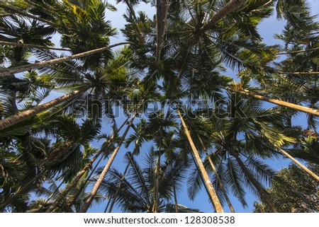 Palm trees in Jungle - stock photo