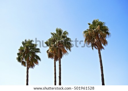 palm trees in Malaga, Spain