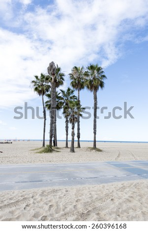 Palm Trees in Santa Monica