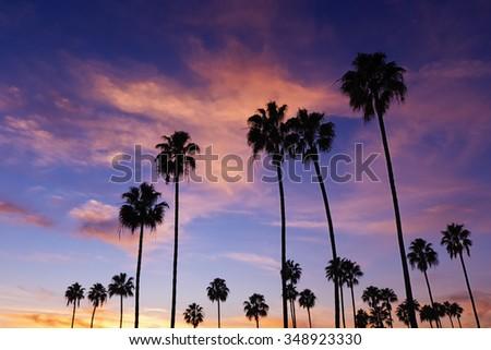 Palm trees in Sunset, Corona Del Mar Beach, California. - stock photo