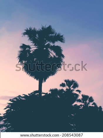 Palm trees in  sunset light  at Thailand beach