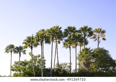 Palm trees in the blue sunny sky, Florida