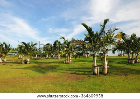 Palm trees in the garden. - stock photo