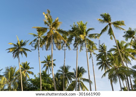 Palm trees in the morning light . - stock photo
