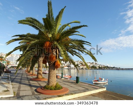 Palm trees in the port. Sitia town on Crete Island, Greece. October 2015.