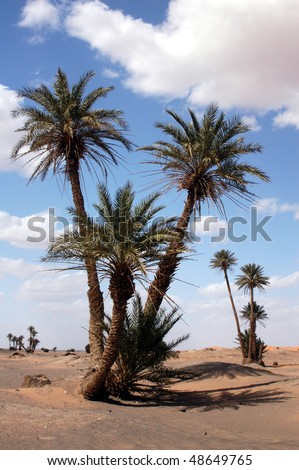 Palm trees in the Sahara Desert, Morocco