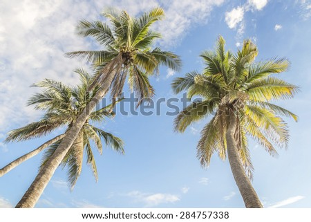 Palm trees in the sky - stock photo