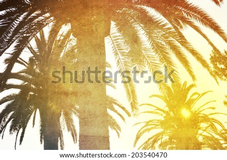 Palm trees in the soft sunset light on textured background, tropical retro look - stock photo