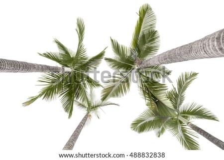Palm trees isolated on the white background,this view looks upward from land.