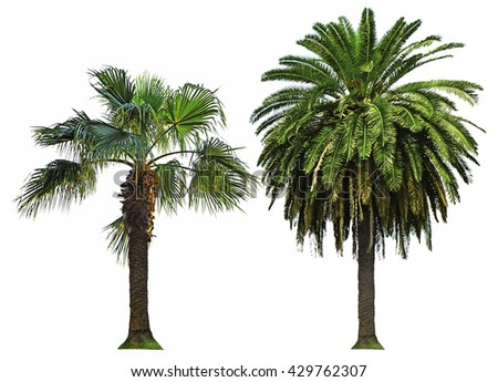 Palm trees, isolated on white