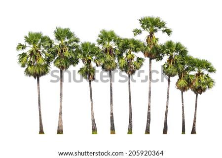 palm trees isolated on white background. - stock photo